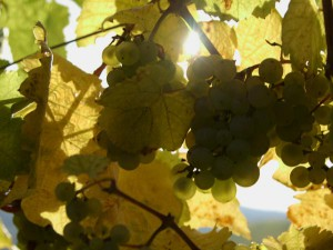 Transgourmet – Wein
